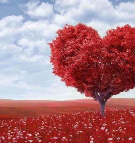 زيت الحبة السوداء ودوره الهام في دعم صحة القلب