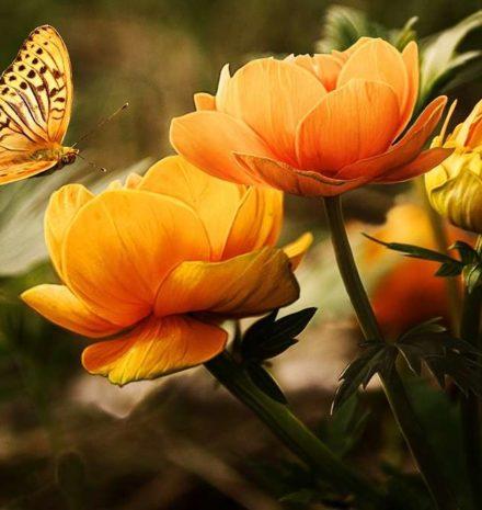 Six Reasons to Choose Natural Living