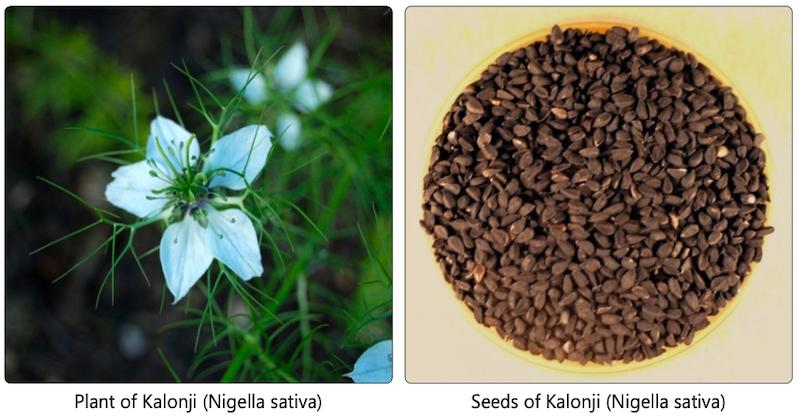 Black Seed Oil Boost Immunity